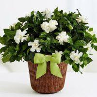 Flower pot hidden camera